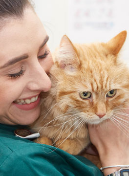 Camlas Petcare Vets, Cat Friendly Clinic Mid-Wales