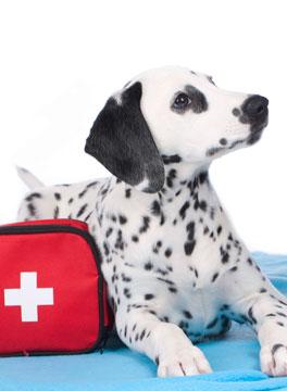 Dog with emergency bag